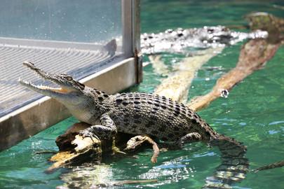 Crocosaurus Cove Entry Ticket