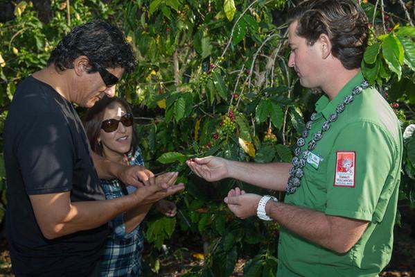 Historic Kona and Farm Tour specials