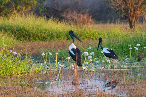 Darwin Wetlands Tour