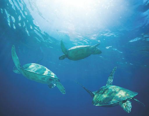 snorkeling tour kawaihae