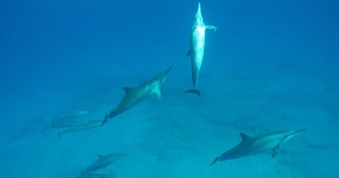 Ocean Rafting Kauai