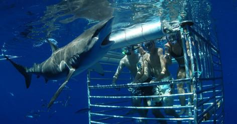 Oahu Shark Cage Diving at Haleiwa