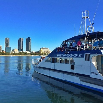 Gold Coast Whale Watching deals