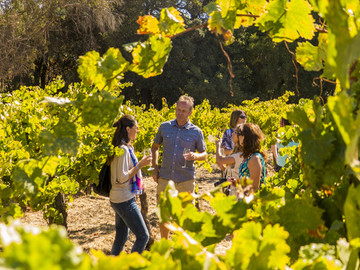 Full Day Wine Country Tour - Napa & Sonoma Valley
