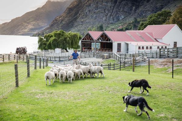Walter Peak Farm Tour Deals