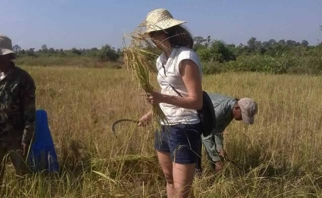 cambodia traditional fishing