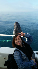 Augusta Whale Watching