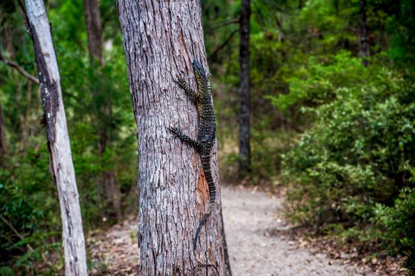 Fraser Island Tag-along tour