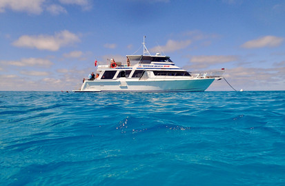Full Day Snorkel And Dive Outer Great Barrier Reef