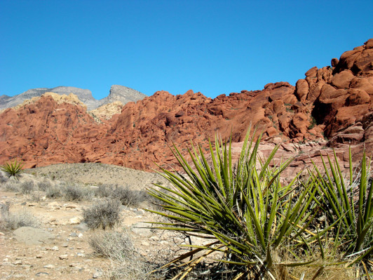 Red Rock Canyon Tours from Las Vegas