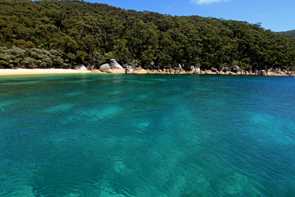 Wilsons Promontory Whale Cruise