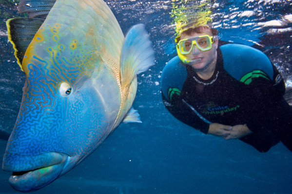 Great Barrier Reef tour reviews