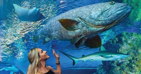 Cairns Aquarium General Admission Ticket
