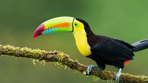 7 Day Jungle Adventure & Amazon Tour - Iquitos, Peru