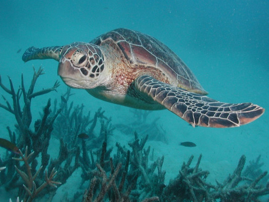 Silverswift Cruise & Introductory Diving