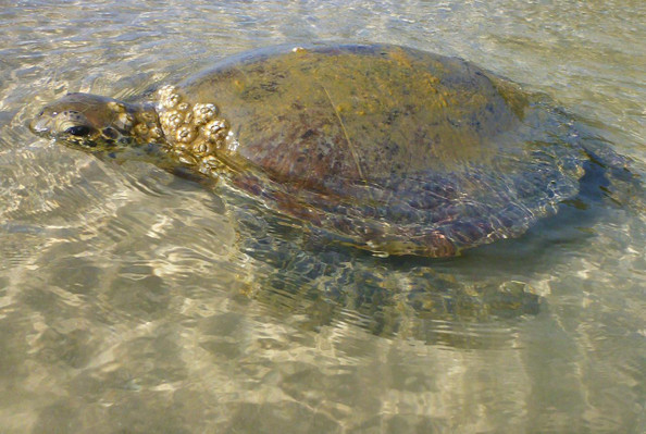 Pelican Bay Turtle Kayak