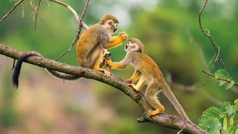 2 Day Jungle Adventure & Amazon Tour - Iquitos, Peru