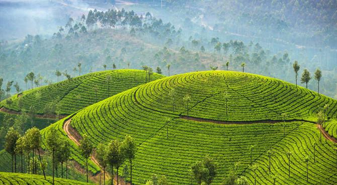 Munnar - Amazing Kerala