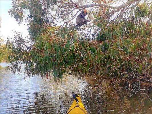 Kangaroo Island Guided Kayak Tour Activity