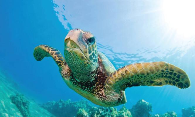 Waikiki Snorkel And Sail Tour Discount
