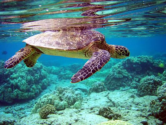 Oahu Clear Kayak Tour Deals