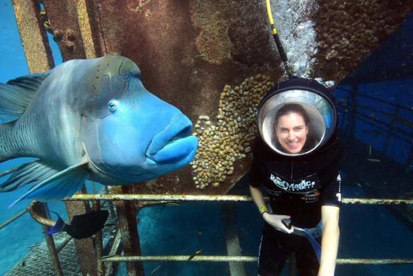 Reef Magic Cruises Underwater