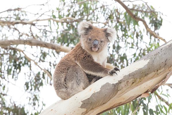 Kangaroo Island Wildlife Discovery