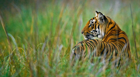 10 Days Rajasthan & Wildlife