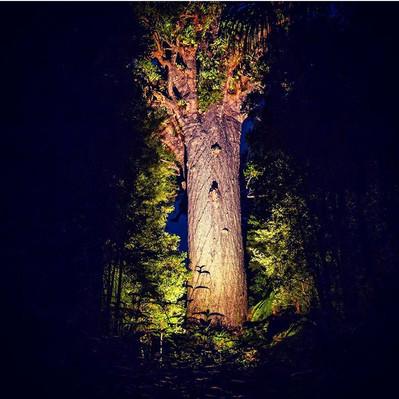 Twilight Encounter