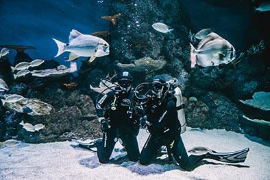 Cairns Aquarium Shark Adventure