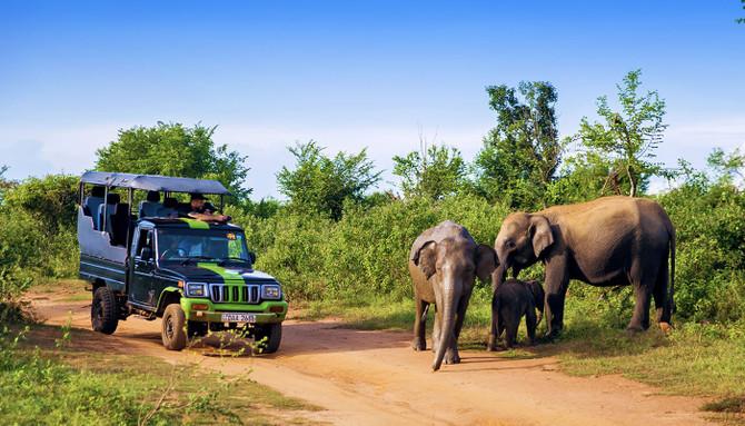 guided safari tour sri lanka