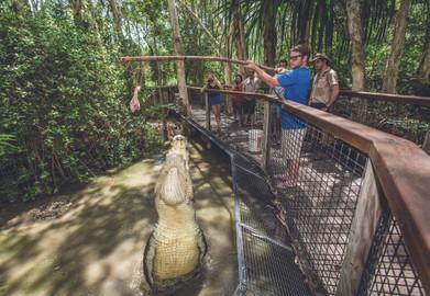 Big Croc Feed at Hartley's Crocodile Adventures