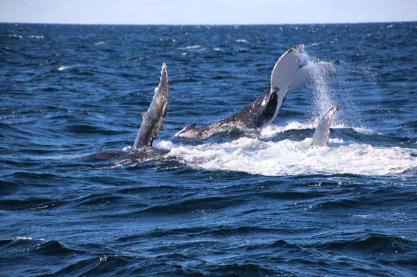Whale Watch Cruise Gold Coast deals