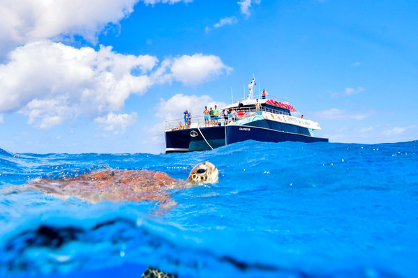 Dreamtime Dive And Snorkel