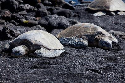 Big Island Grand Circle – Waterfalls, Turtles & Volcanoes