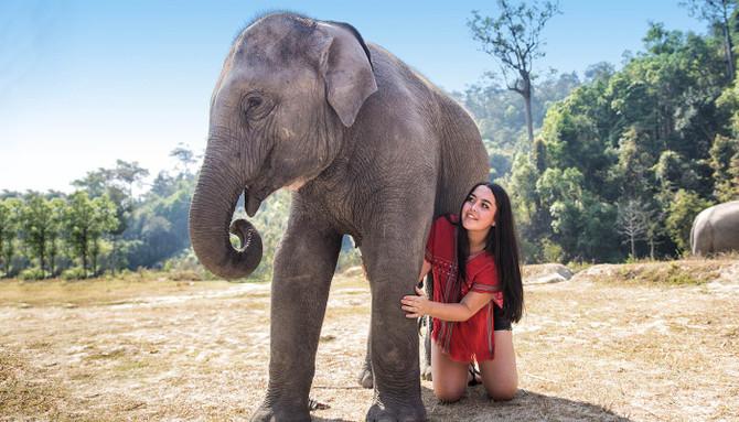 elephant sanctuary thailand tour