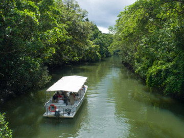 1 Day Daintree Cape Tribulation Bloomfield Track 4WD Tour