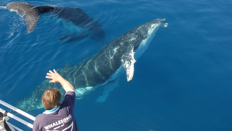 Hervey Bay Whale Watching Tour