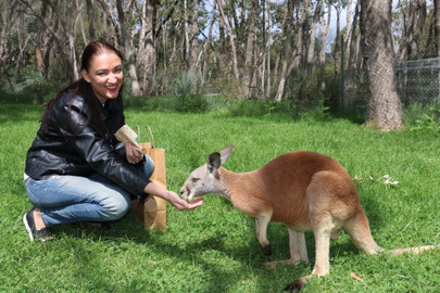 Cleland Wildlife Park Experience