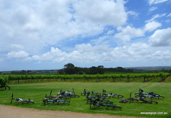 Hills, Vines and Wines by mountain bike discount adventure