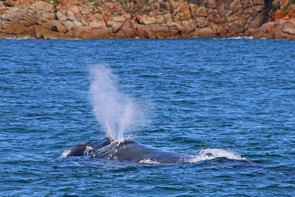 Whale cruise Melbourne