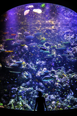 Cairns Aquarium Discount