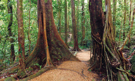 Sunshine Coast Rainforests, Views & Montville Tour with Lunch