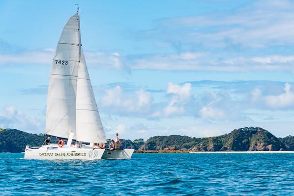 Bay of Islands Snorkelling