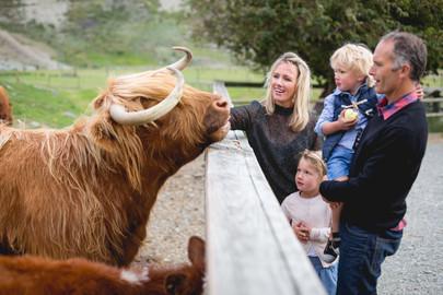 Walter Peak Farm Tour