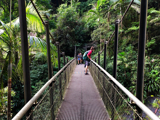 Springbrook Day Tour from Brisbane