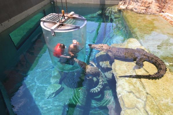 darwin crocosaurus cove cage of death for 2 people