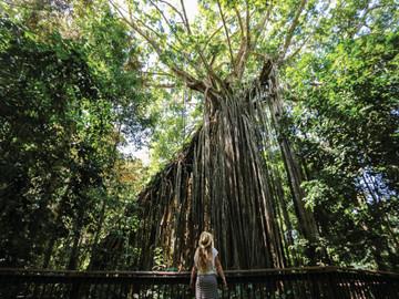 Yungaburra Heritage and Rainforest Tour