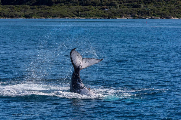 Busselton whale watching cruise deals