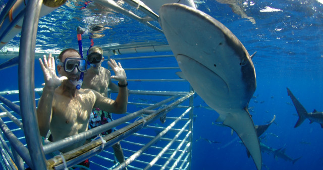 North Shore Shark Cage Diving